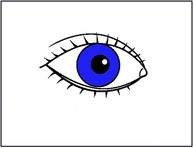 IMAGE(http://www.carmenlu.com/first/vocabulary/health1/body1_1/eye.jpg)