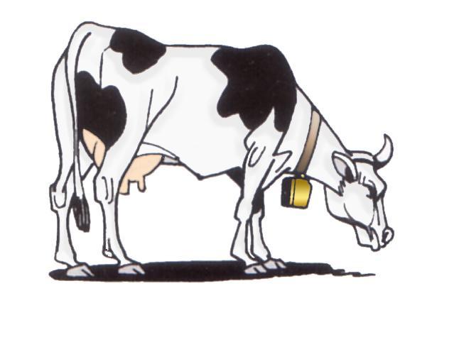 Dibujos cow - Imagui
